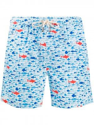 Плавки-шорты с принтом Mc2 Saint Barth. Цвет: синий